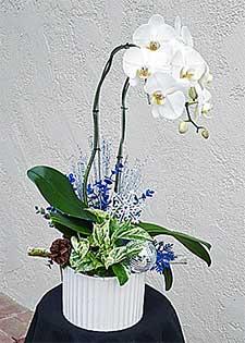 Orchid Arrangements for Designe's clients
